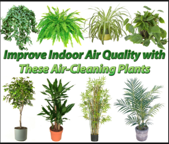 Clean Air Using Indoor Plants